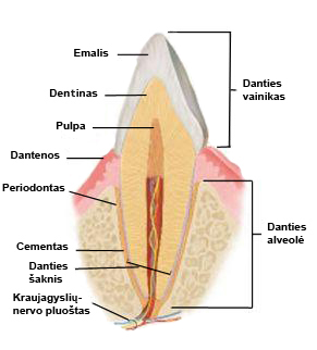 danties-iliustracija